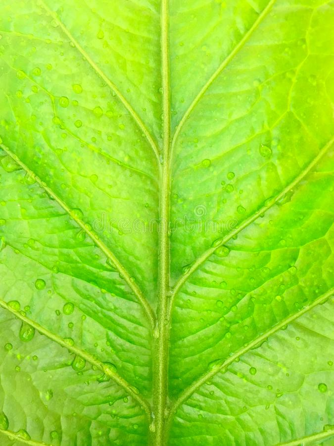 Cierre encima de la textura verde de la hoja con descenso del agua imágenes de archivo libres de regalías