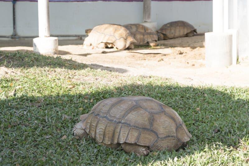 Cierre encima de la tortuga que descansa en el jardín foto de archivo libre de regalías