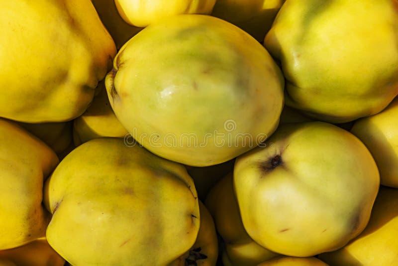 Cierre encima de las frutas del membrillo en soporte del mercado ilustración del vector