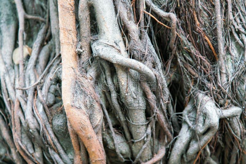 Cierre encima del árbol de la planta de la raíz foto de archivo