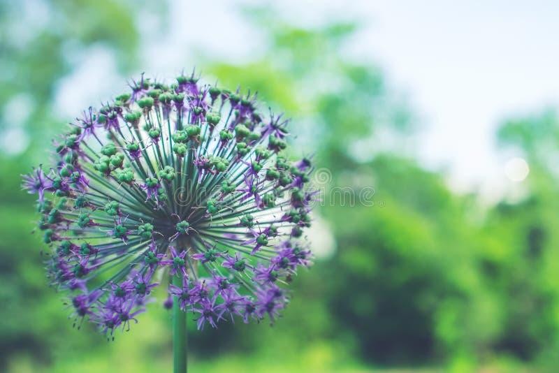 Cierre encima del fondo de la falta de definición de las flores fotos de archivo libres de regalías