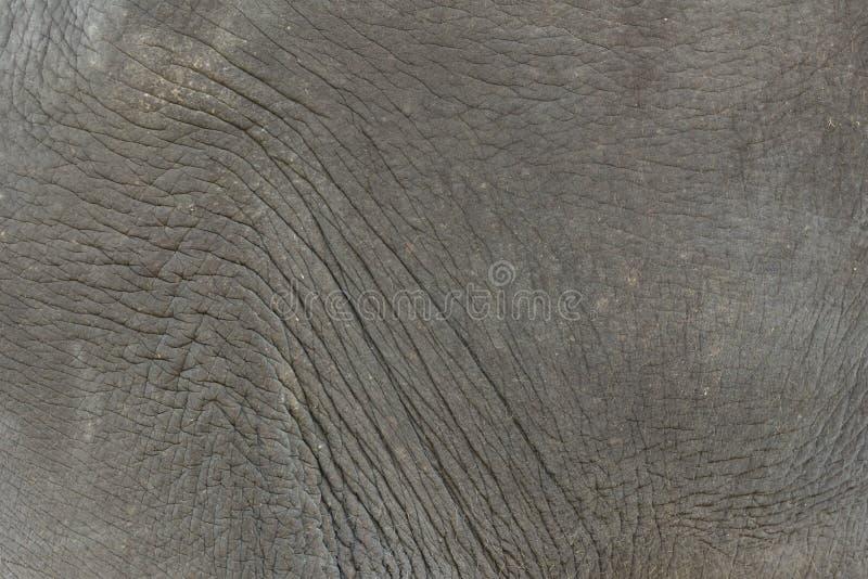 Cierre encima del fondo de la textura de la piel del elefante imagen de archivo libre de regalías