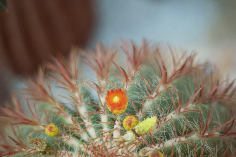 Cierre encima del fondo retro del estilo del vintage del cactus fotografía de archivo libre de regalías
