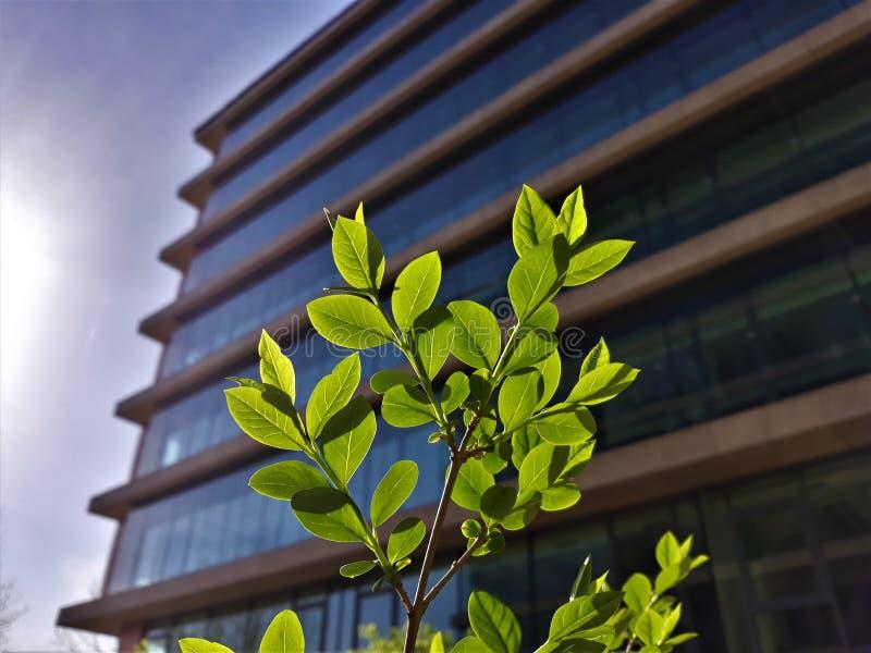 Cierre encima del pequeño frente del árbol del edificio de oficinas fotografía de archivo libre de regalías
