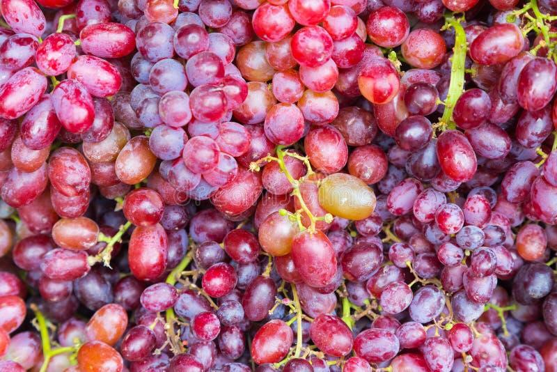 Cierre fresco de la fruta de las uvas para arriba imágenes de archivo libres de regalías