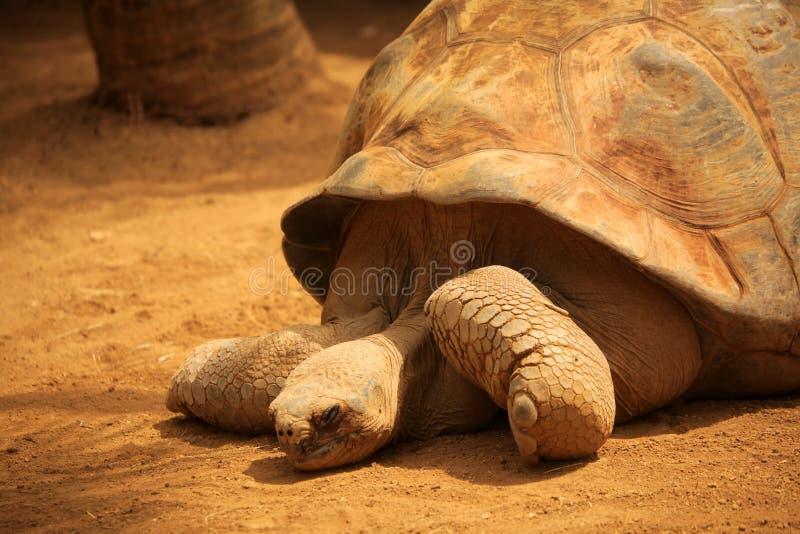 Cierre grande de la tortuga para arriba fotografía de archivo libre de regalías