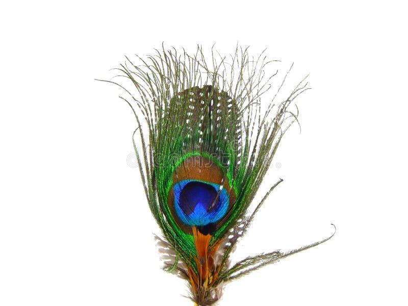 Cierre hermoso de la pluma del pavo real para arriba en fondo blanco aislado imágenes de archivo libres de regalías