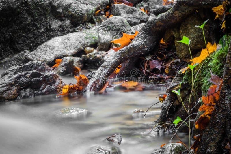 Cierre hermoso del detalle para arriba del río suave del satén liso sedoso que fluye en colores selectivos vivos de la caída del  fotografía de archivo