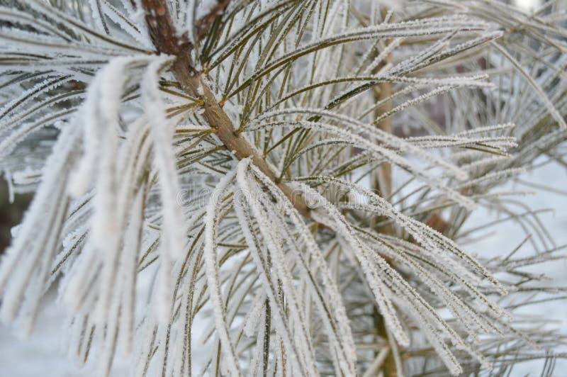 Cierre hermoso encima de la foto de la planta escarchada fotografía de archivo