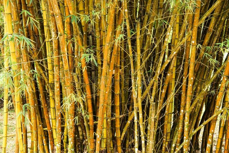 Cierre más forrest de bambú para arriba fotos de archivo