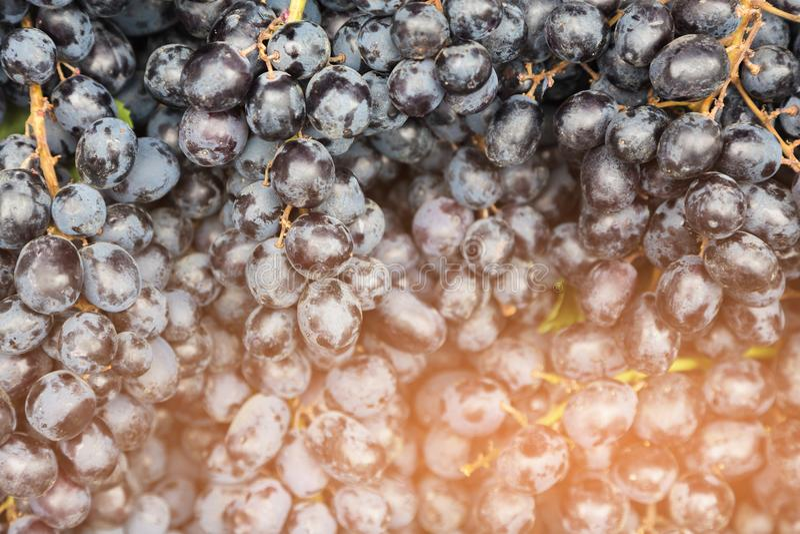 Cierre negro fresco de la fruta de las uvas para arriba fotos de archivo libres de regalías