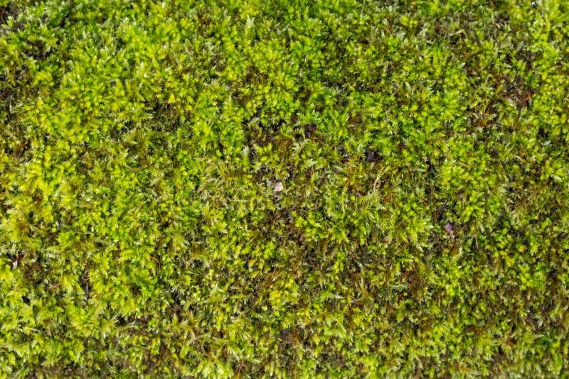 Cierre para arriba de musgo verde en las rocas fotos de archivo libres de regalías