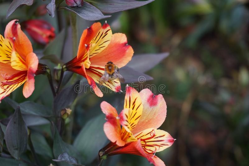 Cierre para arriba de una flor imagen de archivo