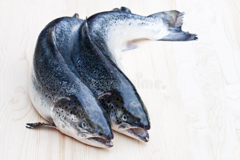 Cierre para arriba en los salmones crudos enteros en fondo de madera imagen de archivo libre de regalías