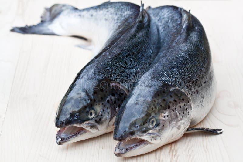 Cierre para arriba en los salmones crudos enteros en fondo de madera imagenes de archivo