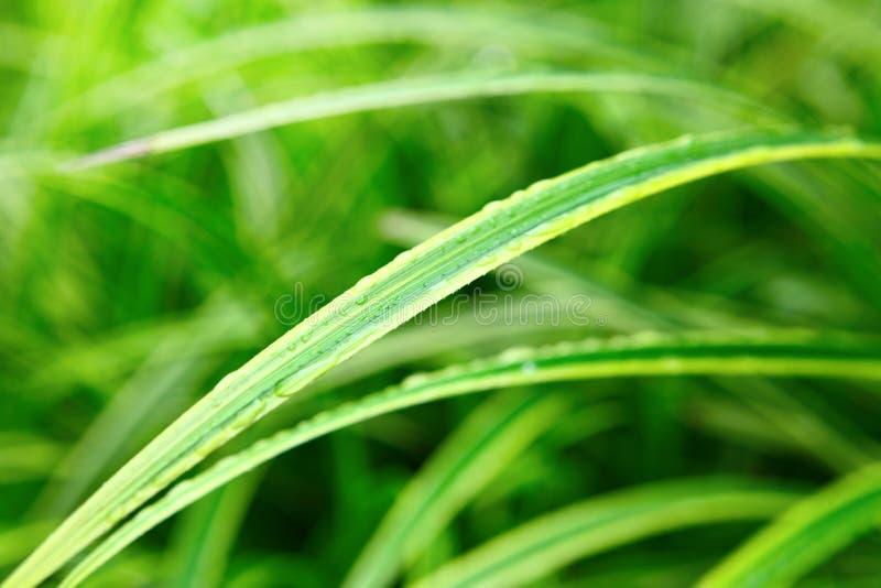 Cierre verde de la hoja para arriba foto de archivo libre de regalías