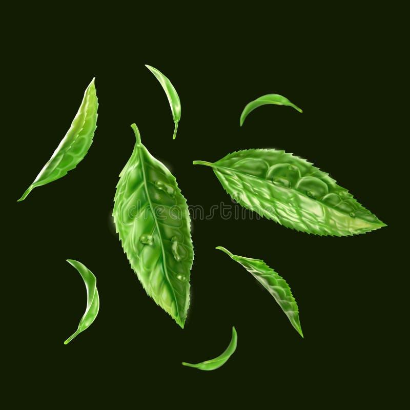 Cierre verde de la hoja de té para arriba con descenso del agua imagen de archivo