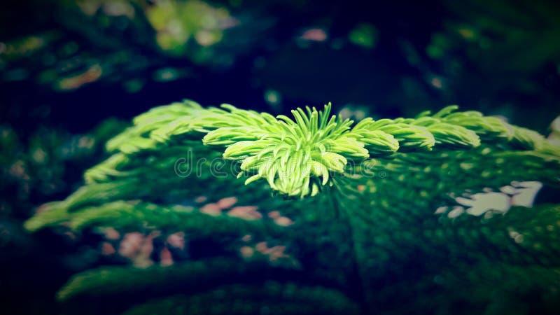 Cierre verde de la macro del árbol del helecho para arriba imagen de archivo