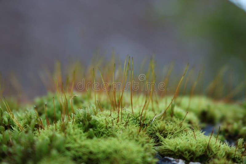 Cierre verde del musgo para arriba fotografía de archivo