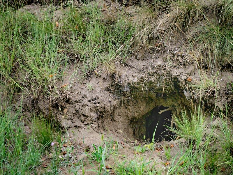 Cierta madriguera u hogar animal desconocida subterráneo en un cov de la ladera fotografía de archivo