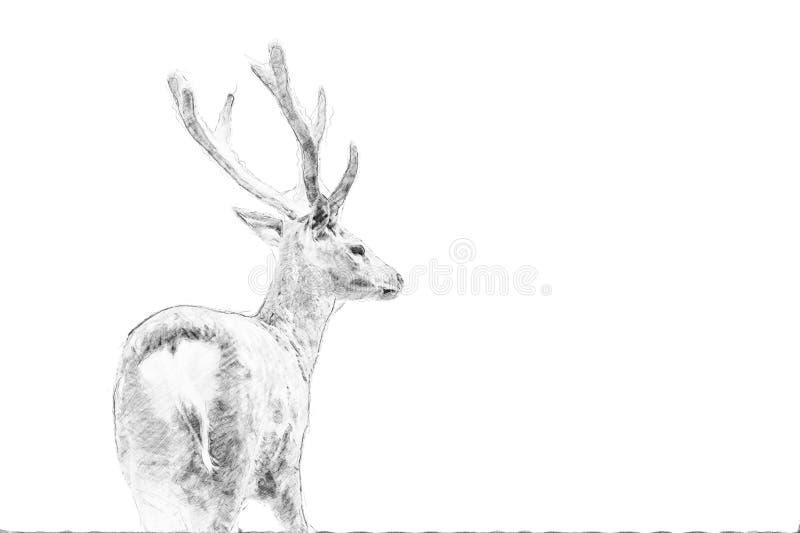 Ciervos Bosquejo con el lápiz ilustración del vector