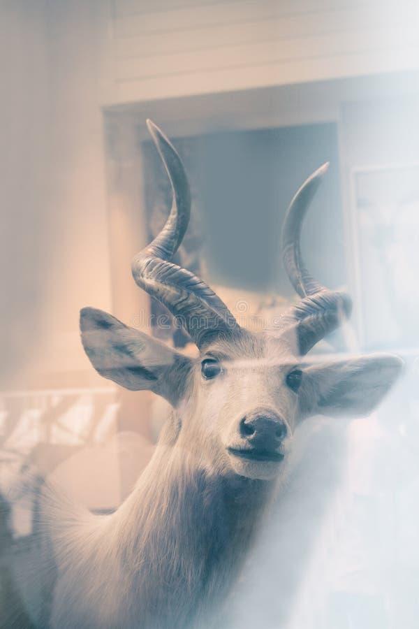 Ciervos de Beautifiul, imagen artística, museo nacional de la historia en Londres, Reino Unido foto de archivo libre de regalías
