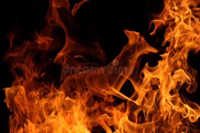 Ciervos de huevas del fuego en llamas imágenes de archivo libres de regalías