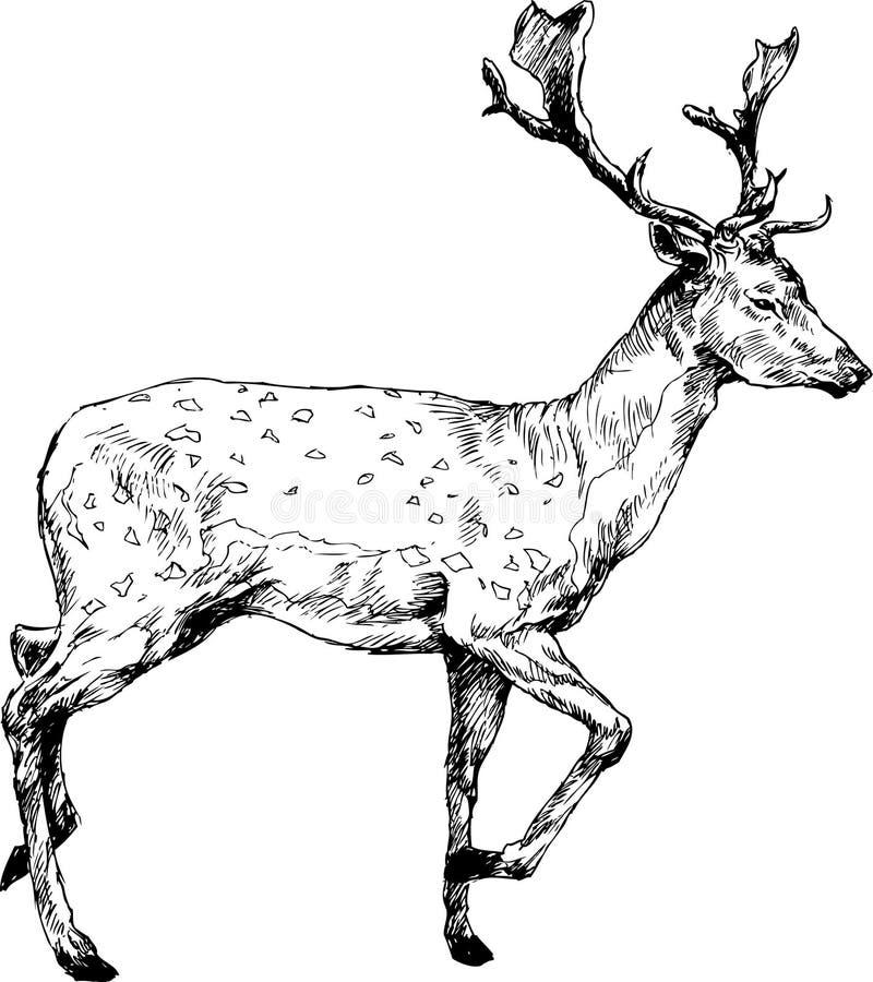 Ciervos dibujados mano libre illustration