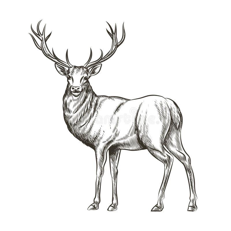 Ciervos dibujados mano stock de ilustración