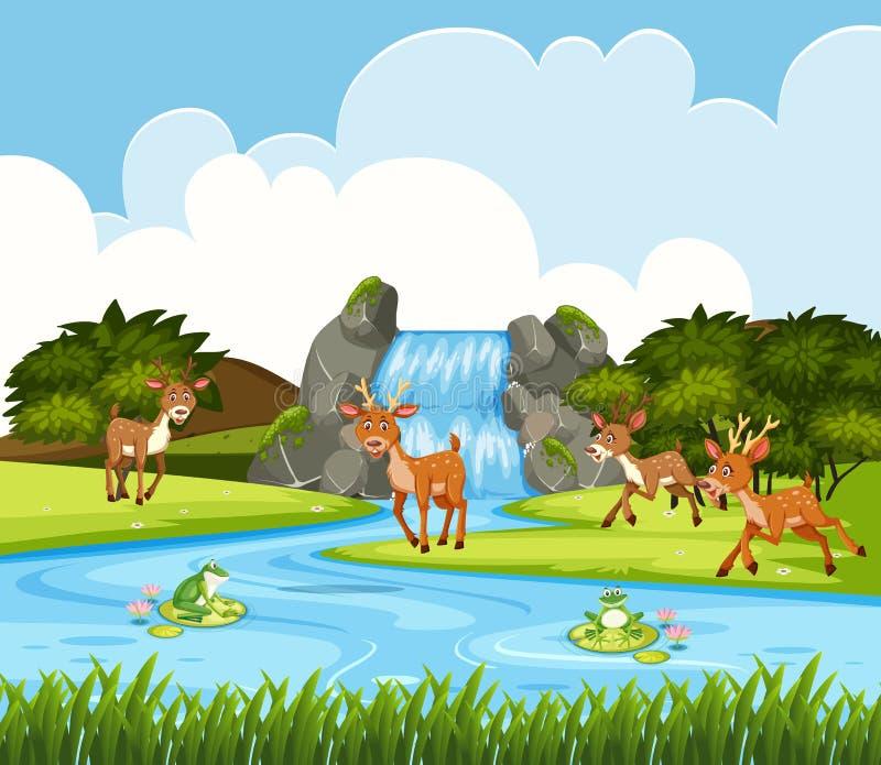 Ciervos en escena de la cascada libre illustration