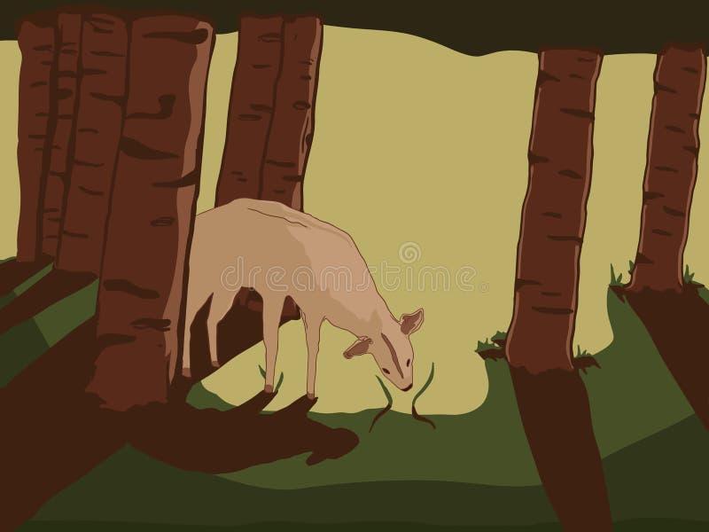 Ciervos en las maderas foto de archivo