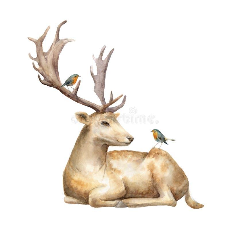 Ciervos masculinos con el petirrojo de los pájaros Ilustración de la acuarela Fondo aislado ilustración del vector
