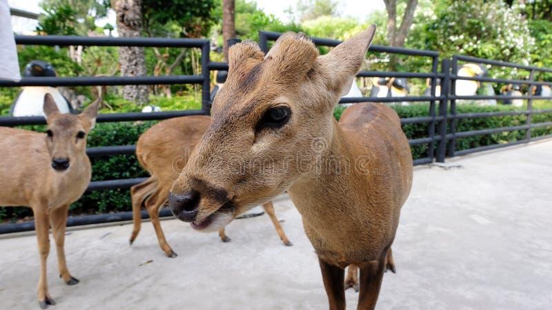 Ciervos salvajes de la alimentaci?n infantil en el zoo-granja Animales de la alimentaci?n de los ni?os en el parque al aire libre imágenes de archivo libres de regalías