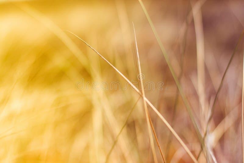 Cieszyć się sens wolność fotografia stock