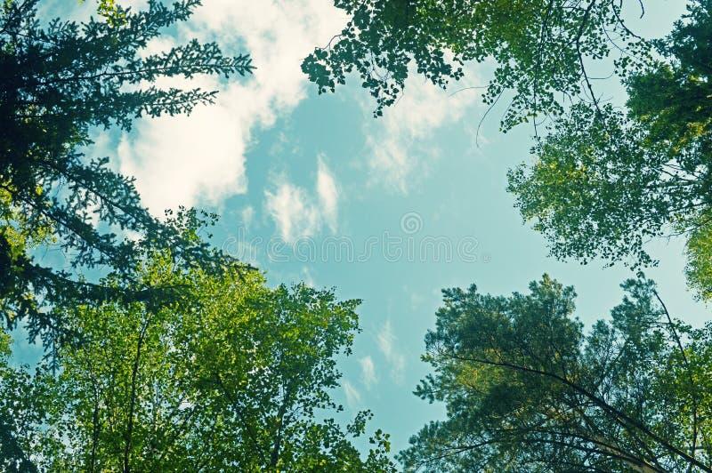 Cieszyć się lasowego widok Chodzi? w lesie obraz stock