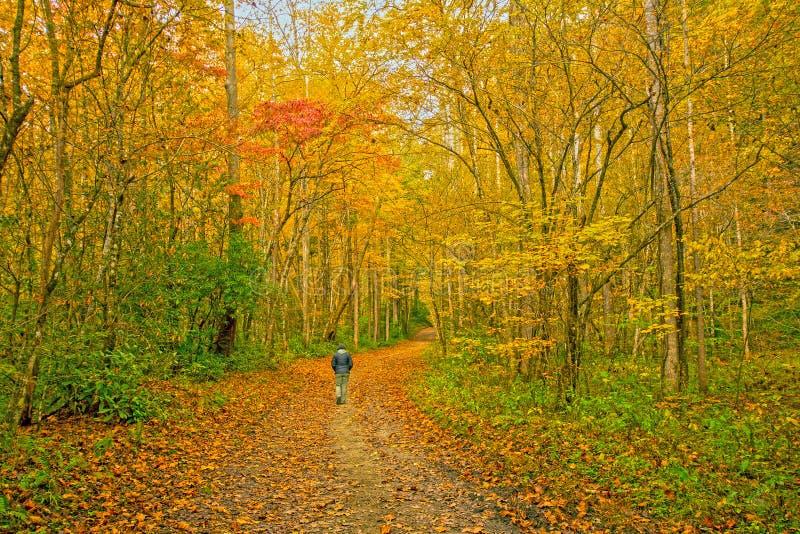 Cieszyć się Spokojnego spacer w spadku lesie obrazy stock
