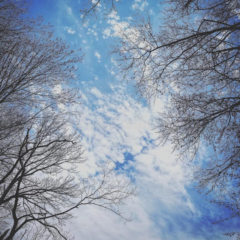 Cieux bleus photo stock