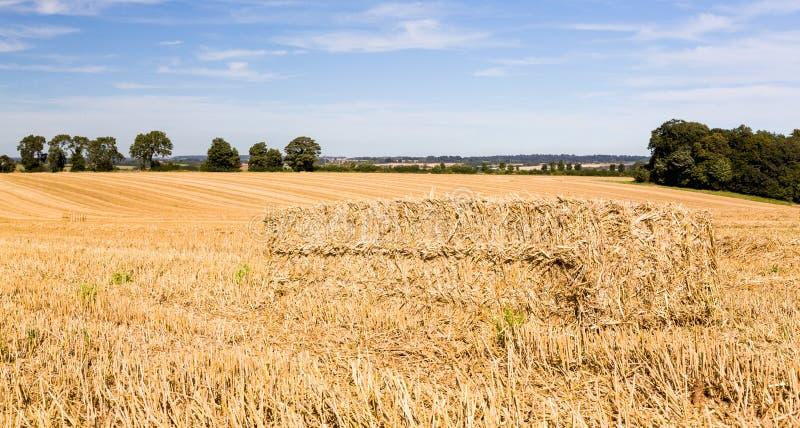 Cieux bleus au-dessus des zones de maïs en Angleterre photographie stock