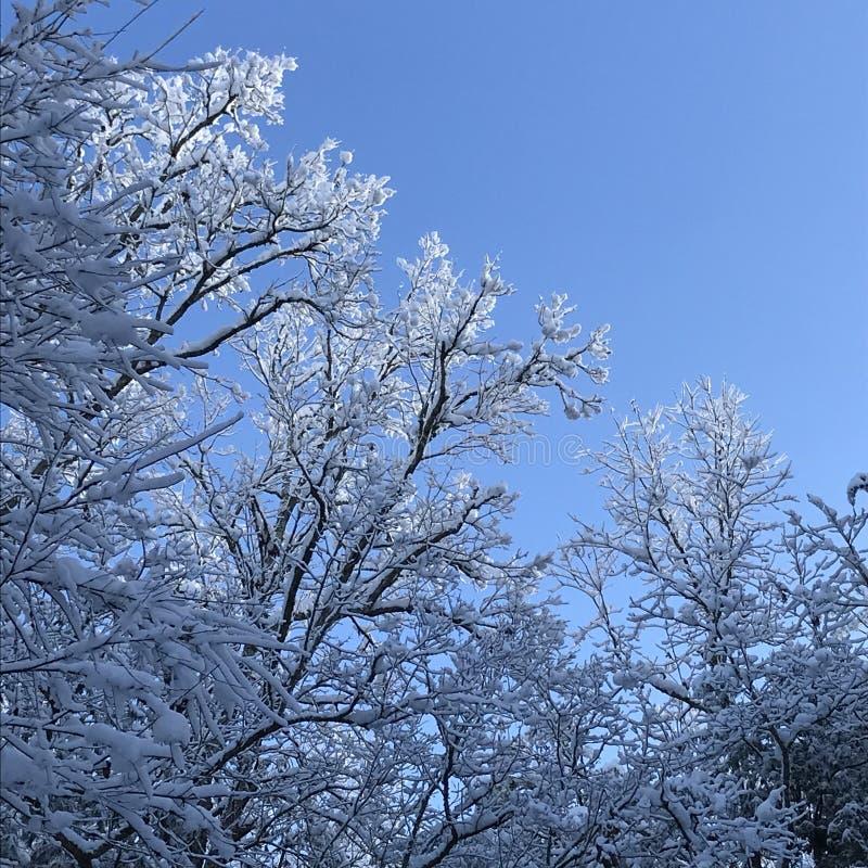Cieux bleus en hiver photos stock
