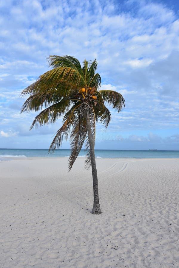 Cieux bleus et océan stupéfiants dans Aruba images stock