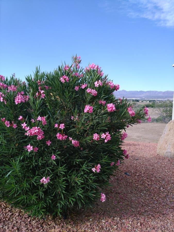 Cieux clairs pour des fleurs d'été photographie stock