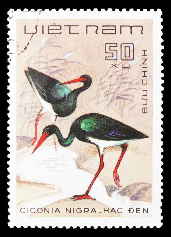 Cigüeña negra (nigra) del Ciconia, serie de los pájaros, circa 1983 imagenes de archivo