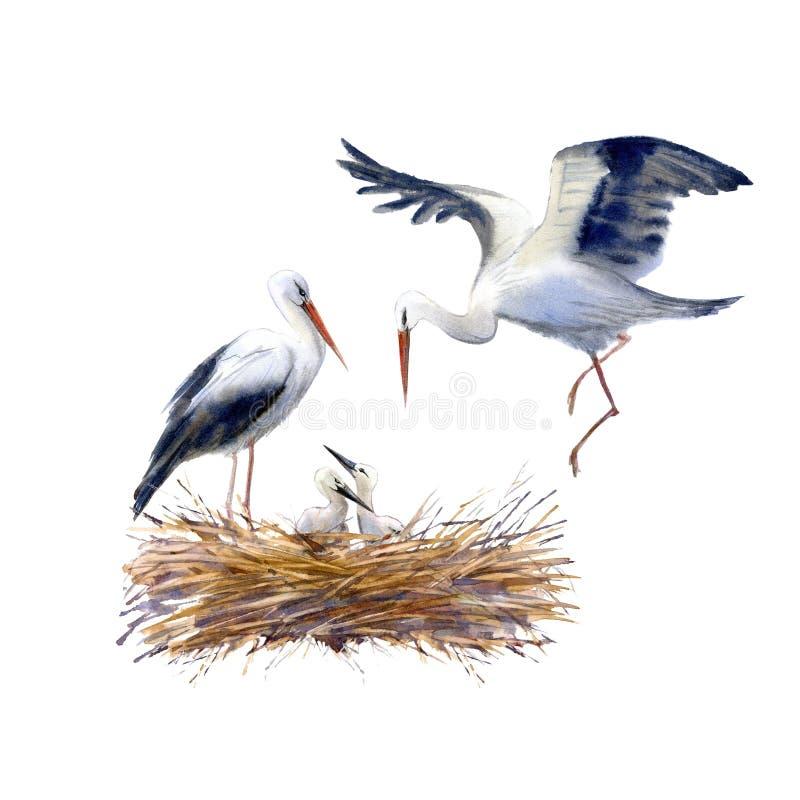 Cigüeñas y polluelo recién nacido en la jerarquía libre illustration