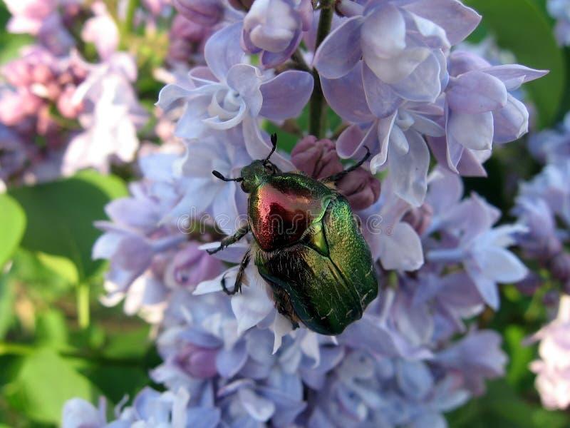 Download ściga bez zdjęcie stock. Obraz złożonej z wiosna, okwitnięcie - 13341154