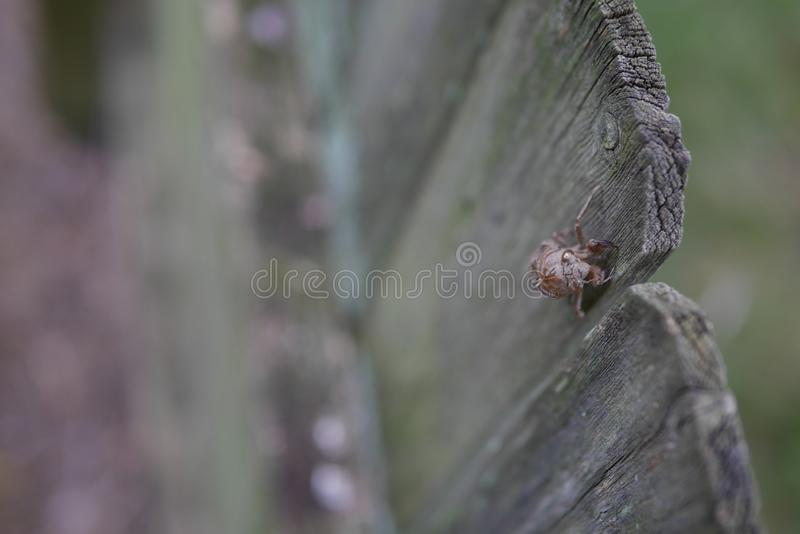 Cigale Shell On Wooden Fence image stock