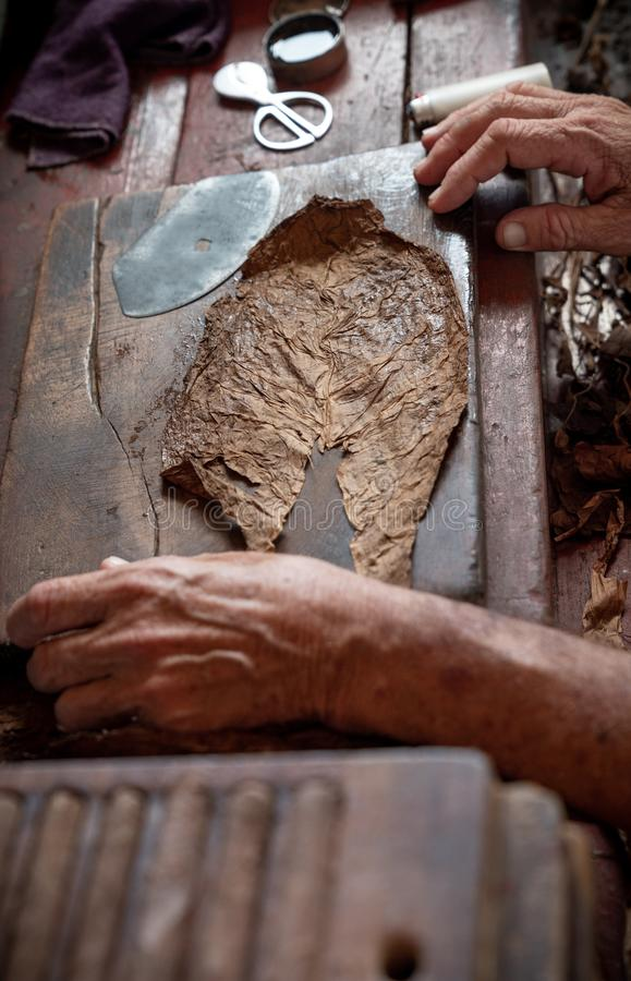 Cigar rolling or making by torcedor in cuba royalty free stock image