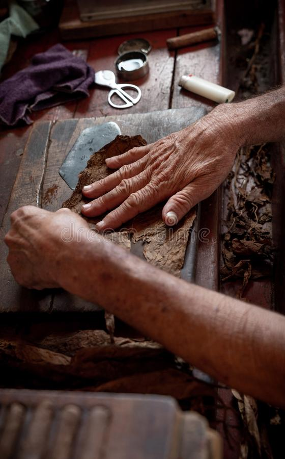 Cigar rolling or making by torcedor in cuba stock photos
