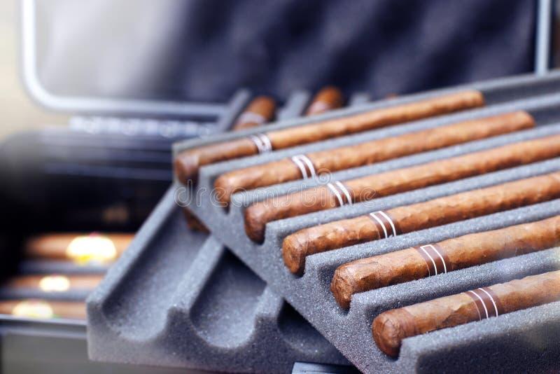 Cigares dans la protection de prime d'humidificateur de cas de voyage photographie stock