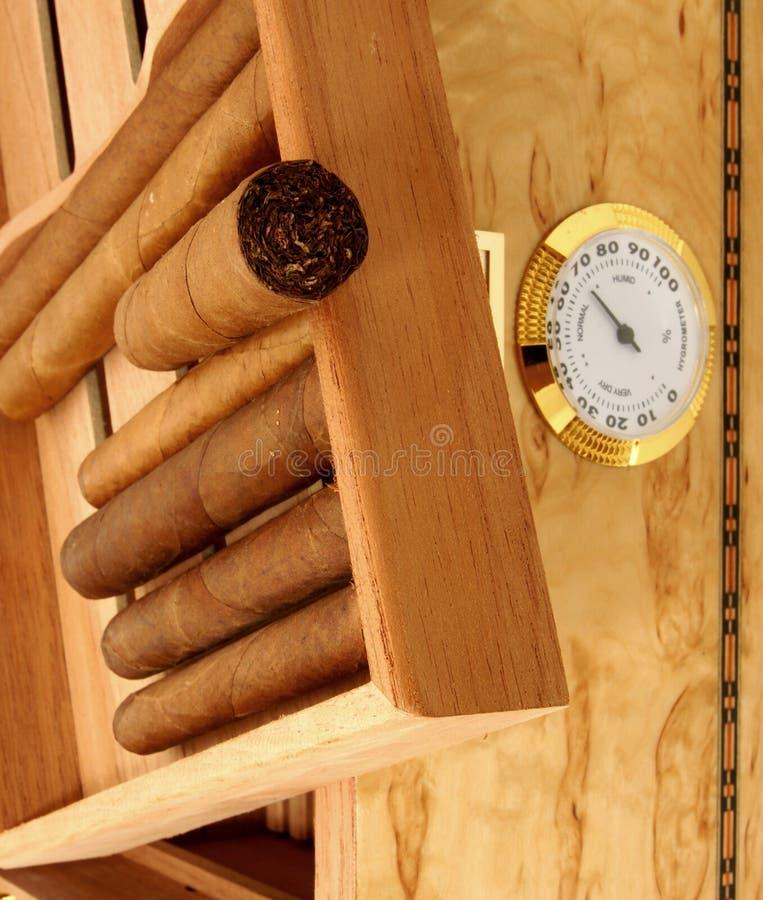 Cigares dans le cadre ouvert d'humidificateur photographie stock