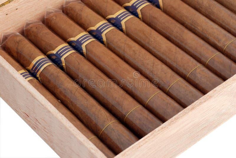 Cigares dans un humidificateur image libre de droits